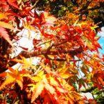 城乃井旅館の温泉の庭のなもみじきれいです💕菊池温泉