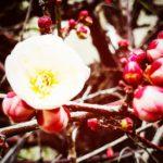 小さい春、見つけた😊
